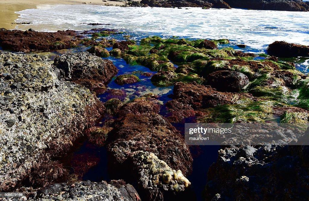 Tide Pools : Stockfoto