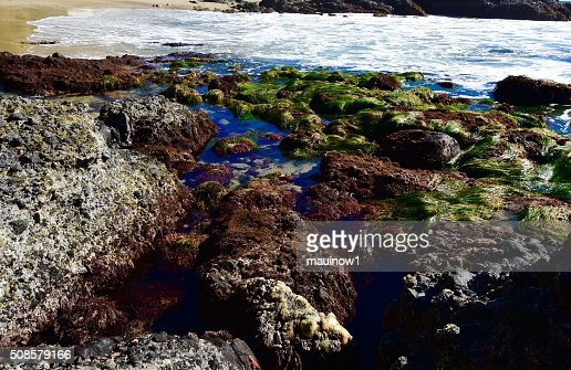 Tide Pools : Stockfoto
