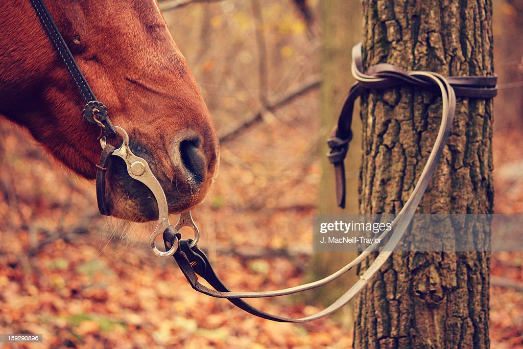 tied horse