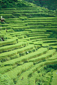Tiered farmland