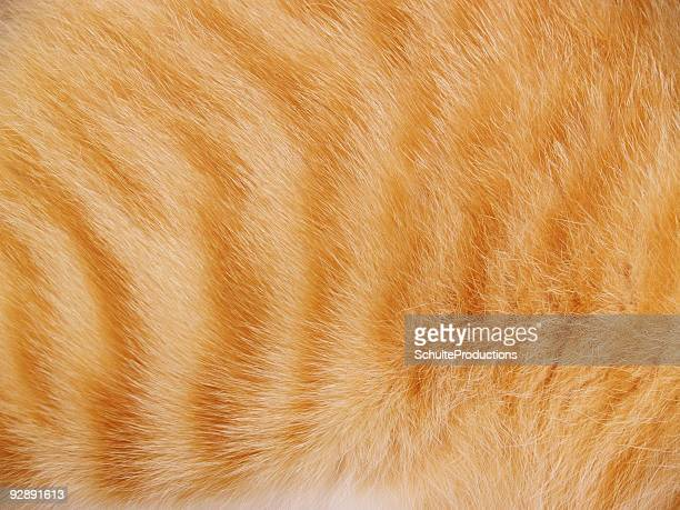 Tiger Cat Fur Background
