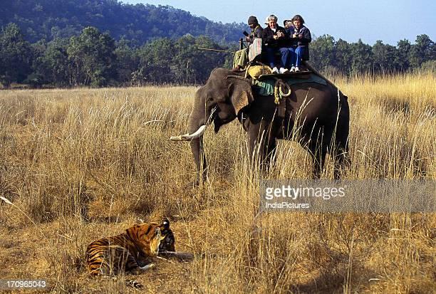 Tiger elephant safari Jim Corbett National Park India