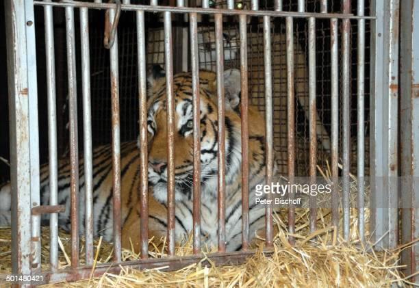 Tiger im Käfig Außengelende vom 'Circus Belly' Bremen Deutschland Europa Tier Reise AS DIG PNr 320/2011 Foto PBischoff Jegliche FotoNutzung nur gegen...