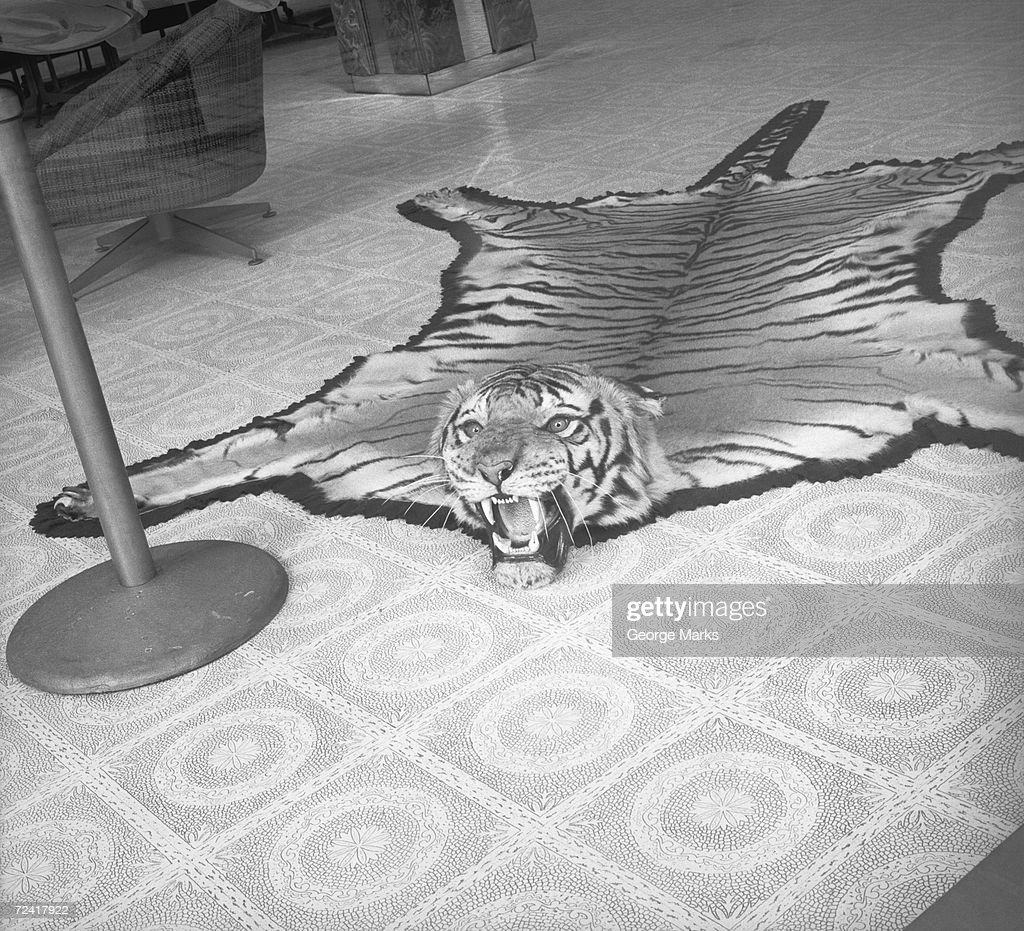 Tiger skin rug lying on floor, (B&W)