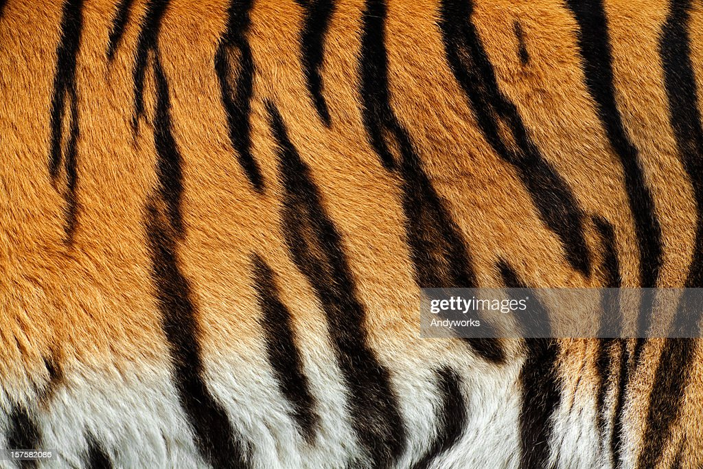 Tiger Skin XXXL