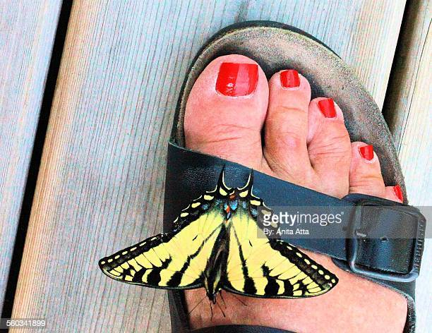 Tiger swallowtail butterfly on woman's foot
