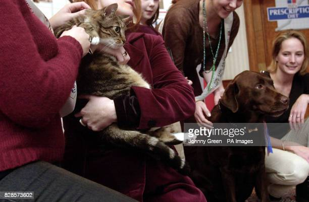 Tiger the tabby cat and Pepper the chocolate labrador pose for photographs after becoming the Pet Cat and Pet Dog Slimmers of the Year 2002 at an...