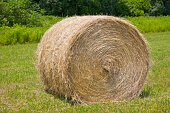 Tightly-wound bale of hay in field