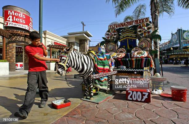 STORY 'Tijuana A City Under the Shadow of a Double Wall' A Mexican youngster strokes a donkey painted as a zebra where tourists have photos at...