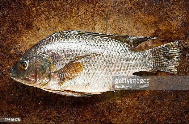 Tilapia Stock Photos And Pictures Getty Images