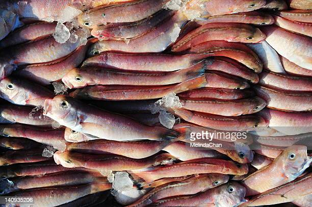 Tilefish at market