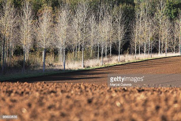 tilled field in autumn