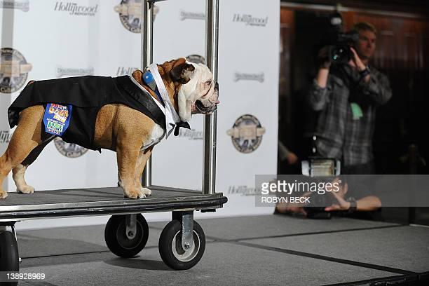 Tillman the skateboarding dog arrives at the first annual Golden Collar Awards February 13 2012 at the Century Plaza Hyatt Regency in Los Angeles...