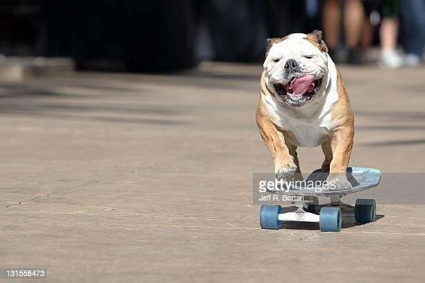 Dodger dog cart casino