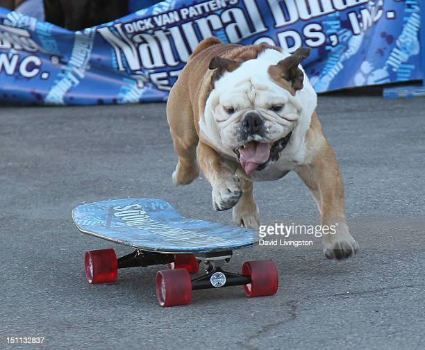 Tillman the Skateboarding Dog attends Bark In The Park at Dodger Stadium on September 1 2012 in Los Angeles California