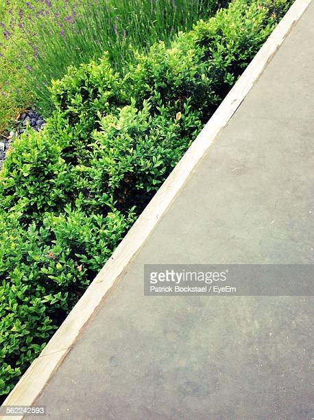Tilt Image Of Retaining Wall Against Plants