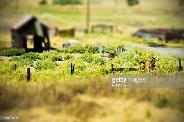 Tilt Shift Horse and Barn