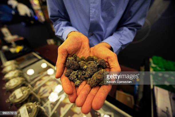 Tim Blakeley manager of Sunset Junction medical marijuana dispensary shows marijuana plant buds on May 11 2010 in Los Angeles California The...