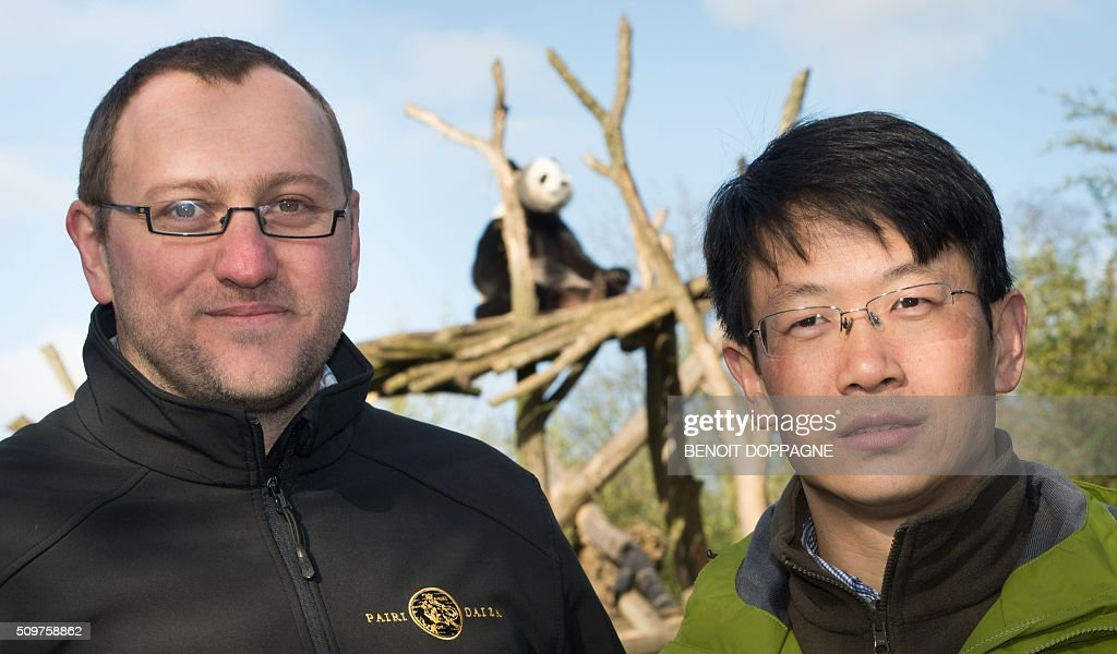 Tim Bouts, director of zoology at Pairi Daiza park (L) and Li Desheng, director of the China Conservation and Research center for Giant Pandas pose in front of female Panda Hao Hao after a press conference regarding the attempted reproduction of giant panda bears Hao Hao and Xing Hui at Pairi Daiza animal park, on February 12, 2016 in Brugelette. Two Chinese experts have been called in to the animal park in Belgium to help two giant pandas Haoi Hao and Xing Hui reproduce. / AFP / Belga / BENOIT DOPPAGNE / Belgium OUT