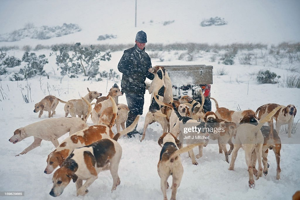 Tim Coulson huntmaster at the Lauderdale Hunt exercises the hounds in the snow at Scarce Law on January 21, 2012 in Lauder, Scotland. Widespread snowfall is affecting most of the UK with school closures and transport disruption. The Met Office has issued a red weather warning for parts of Wales, advising against all non-essential travel as up to 30cm of snow is expected to fall in some areas today.
