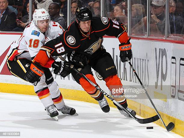 Tim Jackman of the Anaheim Ducks battles for the puck against Matt Stajan of the Calgary Flames on January 21 2015 at Honda Center in Anaheim...