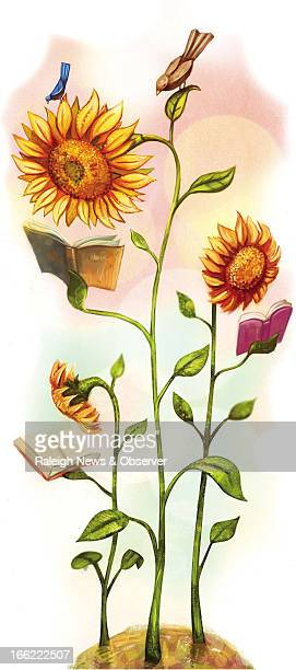 Tim Lee color illustration of sunflowers and birds reading books The News Observer /MCT via Getty Images
