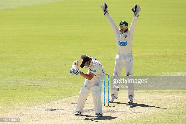 Tim Paine of the Tigers unsuccessfully appeals for the wicket of Marcus North of the Warriors during day four of the Sheffield Shield match between...