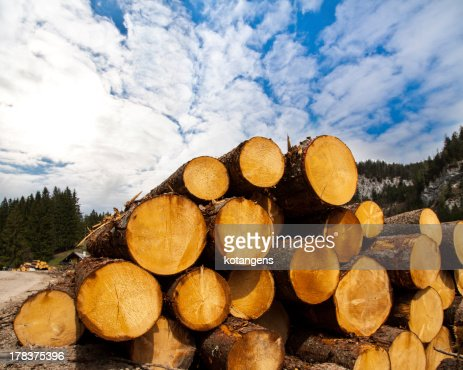 timber logging in Austrian Alps : Stock Photo