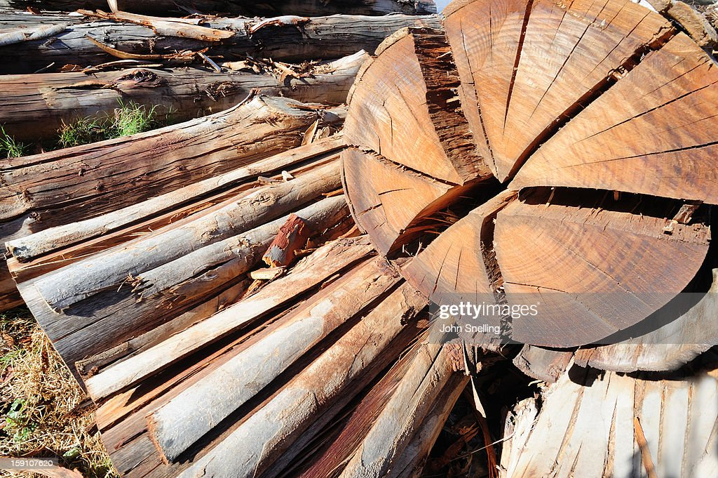 Timber Tree Section : Stock Photo