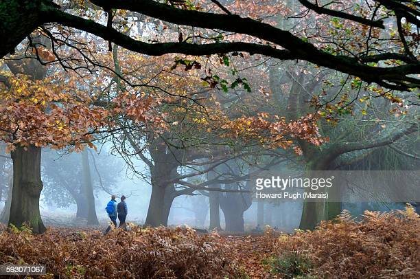 Timberland Stroll through Misty Woods