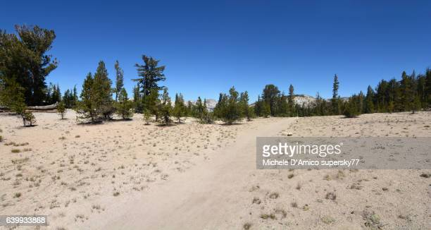 Timberline on granitic soil in the High Sierra Nevada and the John Muir Trail