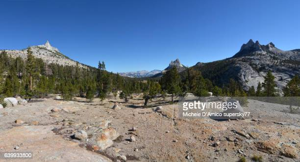 Timberline on granitic soil in the High Sierra Nevada