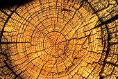 Time in tree rings