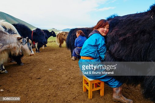 Time to milk the yak