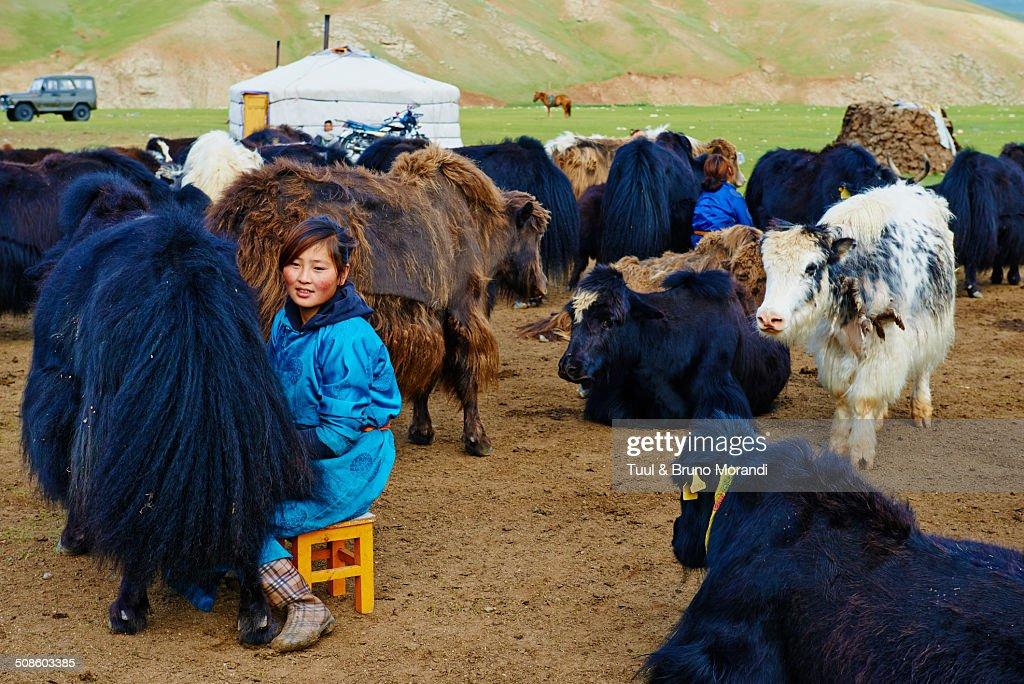 Time to milk the yak : Foto de stock