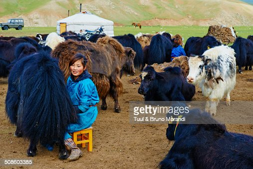 Time to milk the yak : Foto de stock