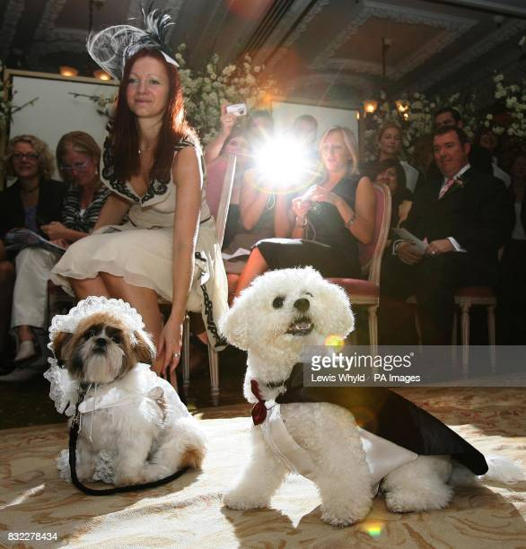Timmy the Bichon Frise and Muffin the Shih Tzu during their unique dog wedding as part of the stores 'Anything is Possible' season