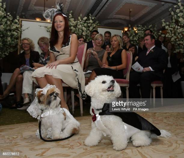 Timmy the bichon frise and Muffin the shih tzu during their unique dog wedding in Harrods as part of the stores 'Anything is Possible' season