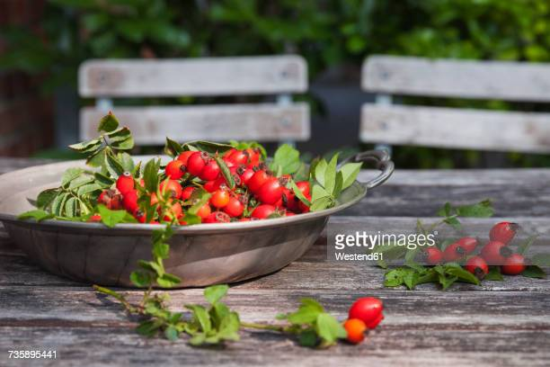 Tin bowl of rosehips on garden table