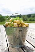 A tin pail full of potatoes Sweden.
