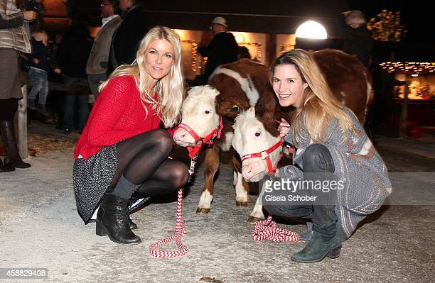 Tina Kaiser Viola Weiss and a calf during the Opening of the Gut Aiderbichl Christmas Market on November 11 2014 in Henndorf am Wallersee Austria