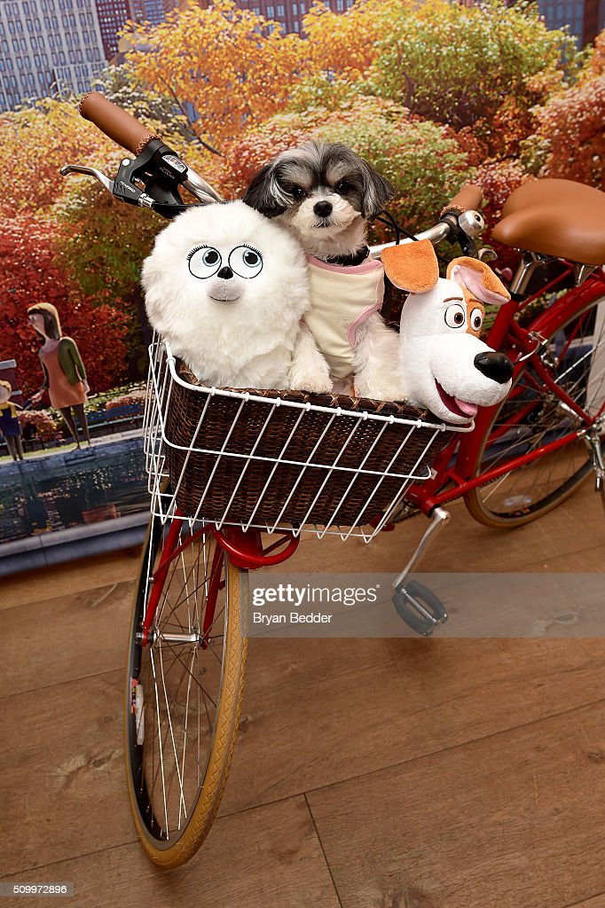Tinkerbelle the Dog attends The Secret Life of Pets toy line reveal at Toy Fair on February 13, 2016 in New York City.