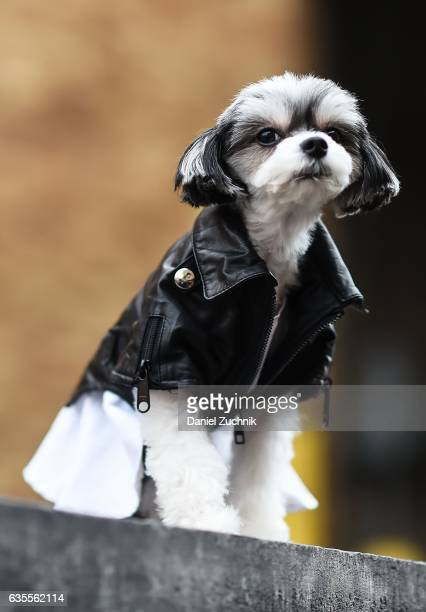 Tinkerbelle the Dog is seen wearing a leather jacket outside the Anna Sui show during New York Fashion Week on February 15 2017 in New York City