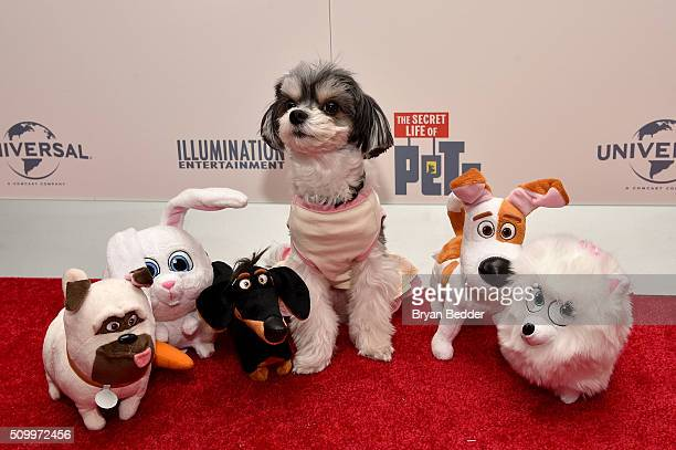 Tinkerbelle the Dog walks the red carpet with Spin Master's plush during The Secret Life of Pets toy line reveal at Toy Fair on February 13 2016 in...