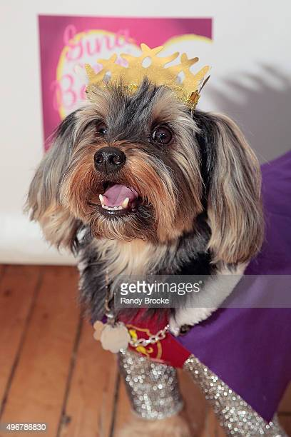 Tinkerbelle's escort Prince Charming poses during the Andi Dorfman Celebrates Tinkerbelle The Dog's Birthday at Inglot Cosmetics on November 11 2015...