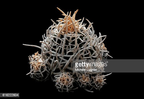 Tiny Corky Spines : Stock Photo
