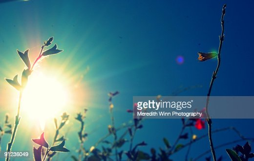 Tiny flowers and blue sky with bright sunflare