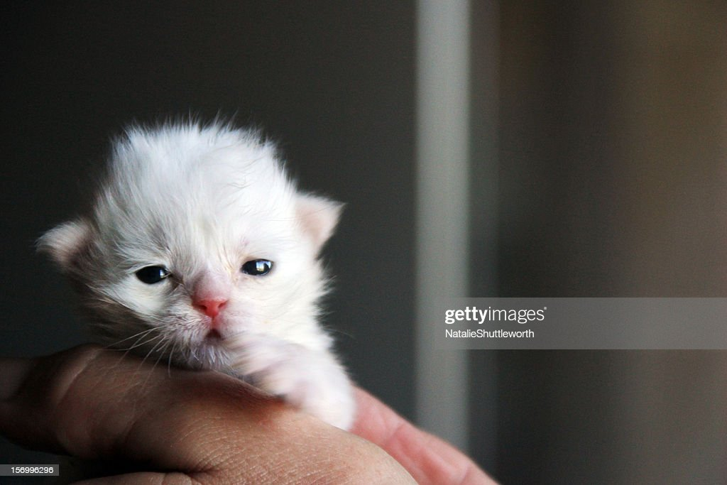 Tiny Kitten : Stock Photo
