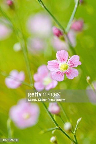 Tiny Pink Flowers Stock Photo