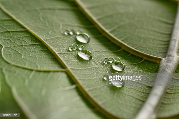 tiny water drop footprints on leaf